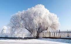 zúzmara fa tél