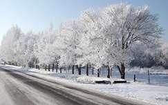 út zúzmara fa tél