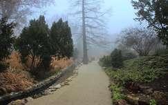 ködös Margitsziget
