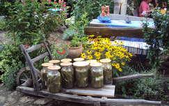 uborka nyári virág kúpvirág zöldség