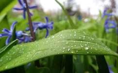 Esős tavasz