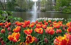 Keukenhof virágoskert, Hollandia