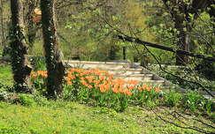 tavasz lépcső tavaszi virág tulipán