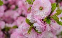 Virágzás, tavasz