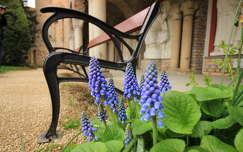 magyarország tavaszi virág székesfehérvár pad fürtösgyöngyike tavasz bory vár