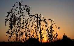 tavaszi naplemente
