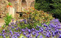 magyarország tavaszi virág székesfehérvár fürtösgyöngyike kertek és parkok tavasz