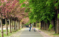 út magyarország virágzó fa fasor tavasz budapest