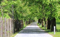 út fasor kerítés fa tavasz