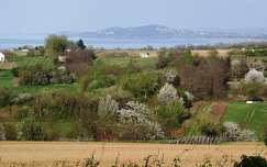 Tavasz, virágzó gyümölcsfa, Balatonberény szőlőhegy
