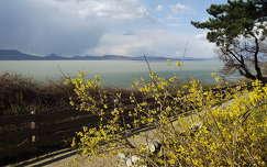 Tavasz, Aranyeső, Fonyód Panoráma sétány