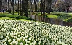 Hollandia, Keukenhof 2016. április