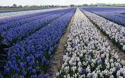 Hollandia, 2016. április