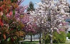 út virágzó fa tavasz