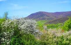 hegy tavasz
