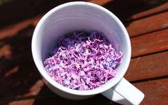 tea ital orgona