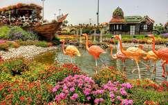 Dubai ,Miracle Garden