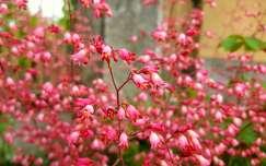 tavaszi vir�g