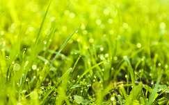 vízcsepp fű