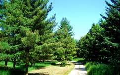 Bábolna.Arborétum