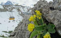 kövek és sziklák libegő vadvirág hegy
