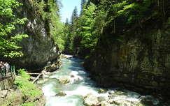 szurdok erdő folyó