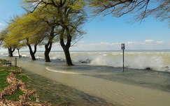 balaton hullám tó fa magyarország