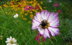 dongó nyári virág rovar