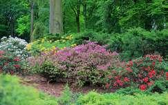 kertek �s parkok tavaszi vir�g rododendron