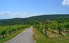 Felsőörsi szőlő birtok