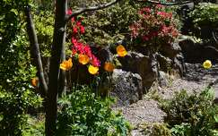 kertek és parkok írország