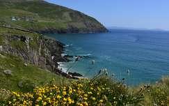kövek és sziklák tengerpart vadvirág írország