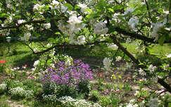 Tavasz,kert