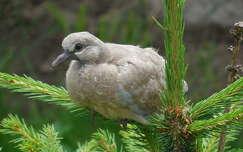 madár madárfióka