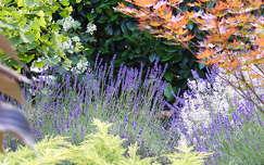 nyári virág kertek és parkok vadvirág levendula