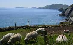 tengerpart írország kerítés juh háziállat