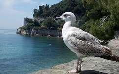 Olaszország, Trieszti öböl