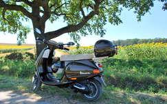 árnyék motor nyár fa napraforgóföld
