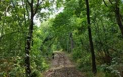 Mecsek, erdő, vasút