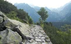 fa tátra hegy út kárpátok