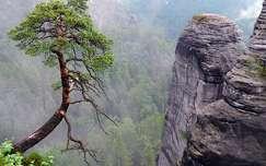 Szászország