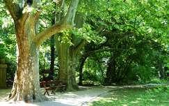 Sárvár, Arborétum