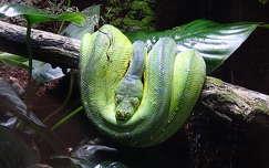 kígyó hüllők