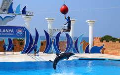 delfin palackorrú delfin