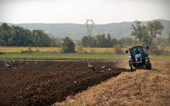 nyár traktor madár gólya