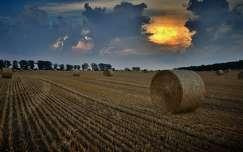 nyár fény gabonaföld felhő