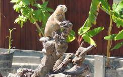 Földikutya az Állatkertben