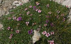alpesi virágcsokor