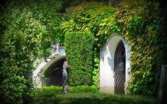 örökzöld kapu