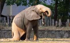 Nyíregyházi Állatpark, Elefántbébi